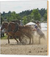 Horse Pulling Team Wood Print