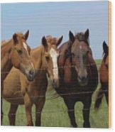 Horse Quartet Wood Print