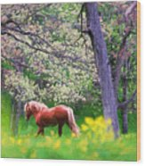 Horse Running In Spring Woods Wood Print