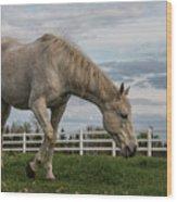 Horses #1 Wood Print