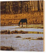 Horse Silhouetted Wood Print