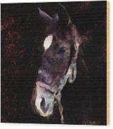 Horse Study #4 Wood Print