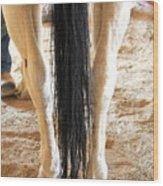 Horse Tail. Wood Print