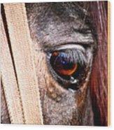 Horse Tears Wood Print