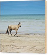 Horse Walking On Beach Wood Print by Vitor Groba