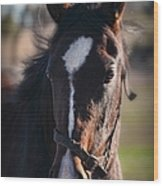 Horse Whispering Wood Print
