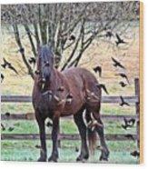 Horsebirds Wood Print