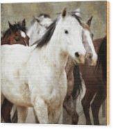 Horses-01 Wood Print