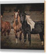 Horses 40 Wood Print