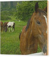 Horses At Kualoa Ranch Wood Print