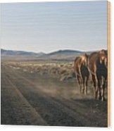 Horses Cruising Wood Print