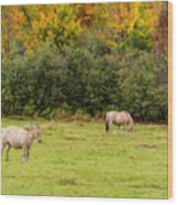 Horses Enjoying A Beautiful Autumn Day Wood Print