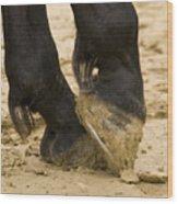 Horses Feet Wood Print