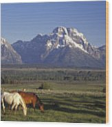 Horses Graze At Lost Creek Ranch Wood Print by Richard Nowitz