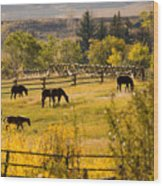 Horses Grazing In The Late Afternoon Wood Print