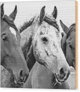 Horses - Id 16217-202749-4749 Wood Print