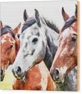 Horses - Id 16217-202757-3803 Wood Print