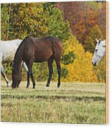 Horses In Autumn Wood Print
