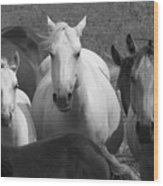 Horses In Black And White Wood Print