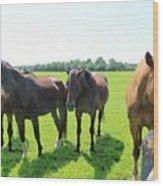 Horses In Bridgehampton Wood Print