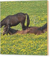 Horses In Daisy Field Wood Print