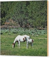 Horses In Meadow - California Wood Print