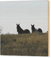 Horses In The Field Wood Print