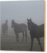 Horses In The Fog Wood Print