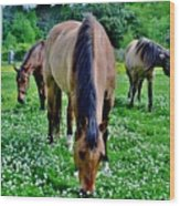 Horses In The Meadow Wood Print