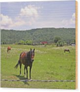 Horses In The Pasture Wood Print