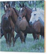 Horses Looking Wood Print