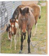 Horses On A Street Wood Print