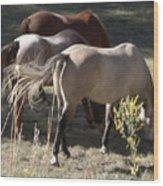 Horses Paradise Valley Wood Print