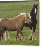 Horses Photography Wood Print