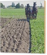 Horses Plowing Rows Two  Wood Print