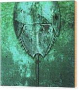 Horseshoe Crab Wood Print