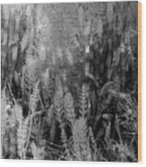 Horsetail Plant Panorama Two  Wood Print