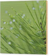Horsetail With Dew Wood Print