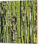 Horsetails #2 Wood Print