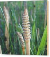 Horsetails And Dew Drops Wood Print
