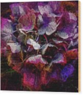 Colorful Hortensia Closeup Wood Print