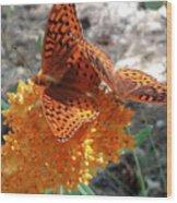 Horton Butterflies Wood Print