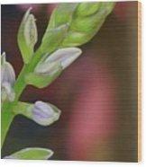 Hosta Blooming Wood Print