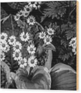 Hosta Daisies Wood Print