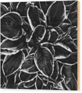 Hosta In Black And White Wood Print