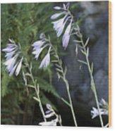 Hosta Watcher Wood Print