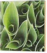Hostas 5 Wood Print by Anna Villarreal Garbis