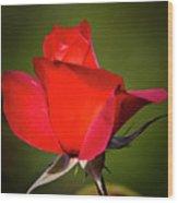 Hot Cocoa Rose Wood Print