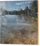 Hot Mammoth Springs Reflection Wood Print