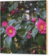 Hot Pink Camellias Glowing In The Shade Wood Print